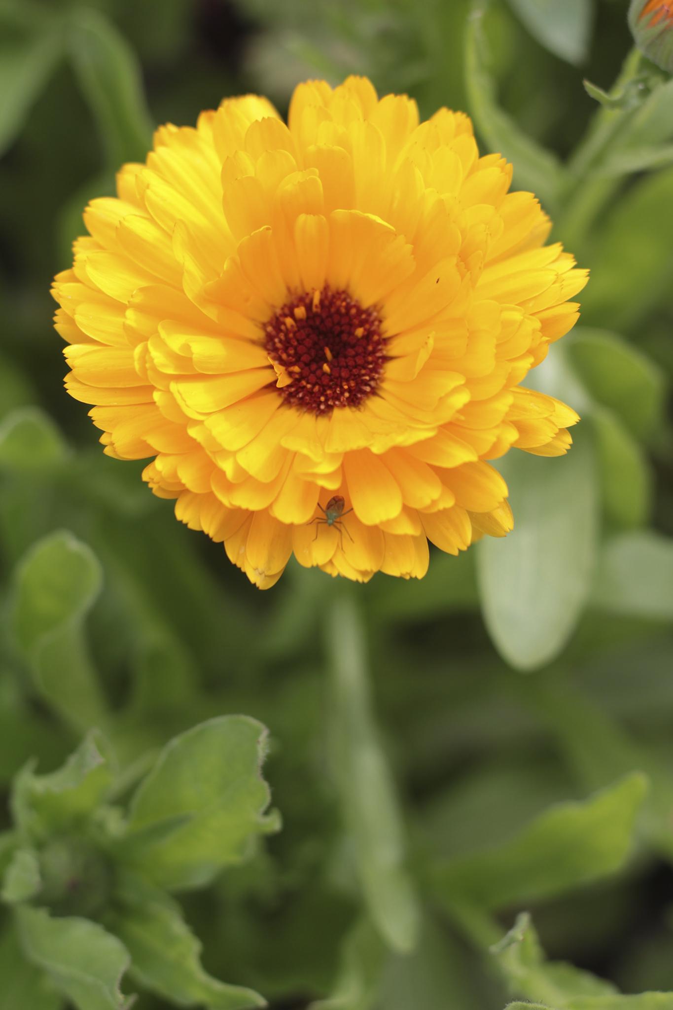Kukkanen