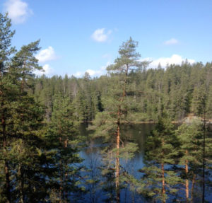 Näkymä Hynkänlammelle. Alakuvassa puronen Pirttimäkeä kiertävän ympyräreitin varrella.
