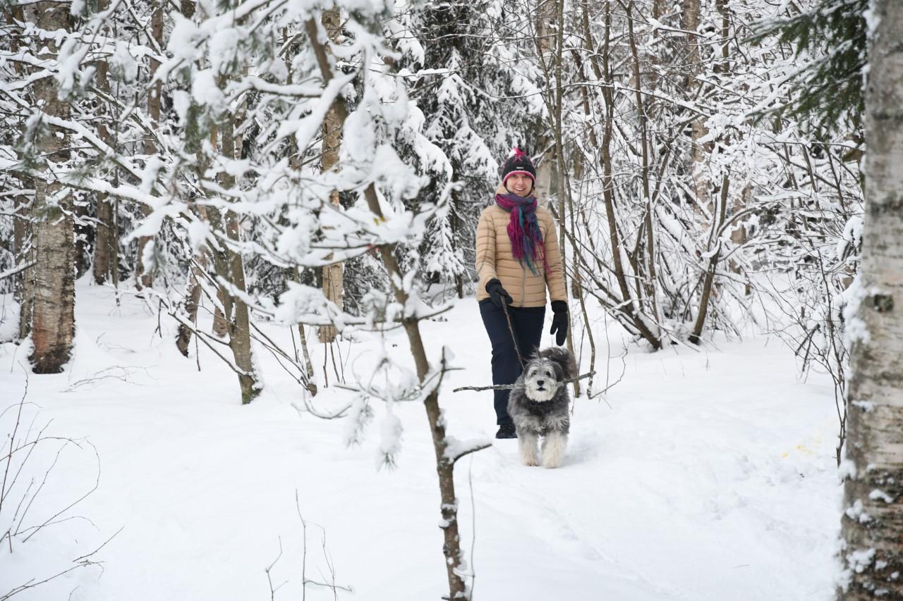 Nainen ja keppiä kantava koira ulkoilemassa lumisessa metsässä.